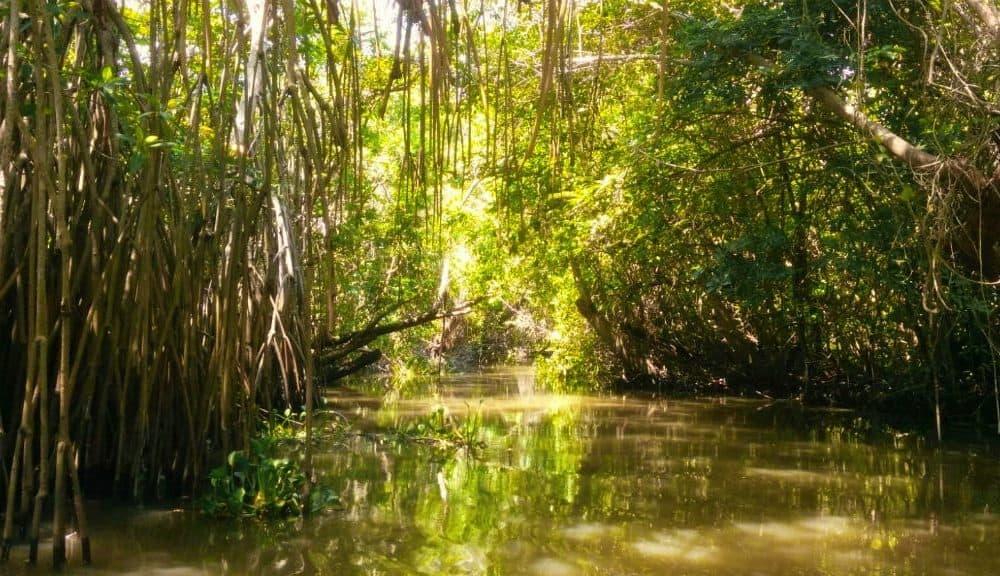 8 razones para visitar los Pantanos de Centla en Tabasco