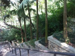 Chinese landscaping - trees lined up beside the stair