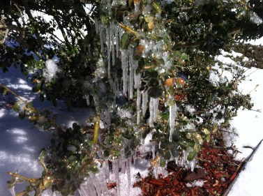 More icicles in the sun