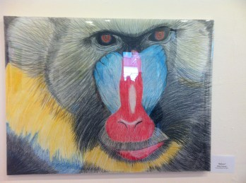 Julia G, the baboon