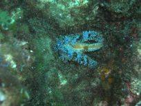 Estrella de mar en posició de ioga