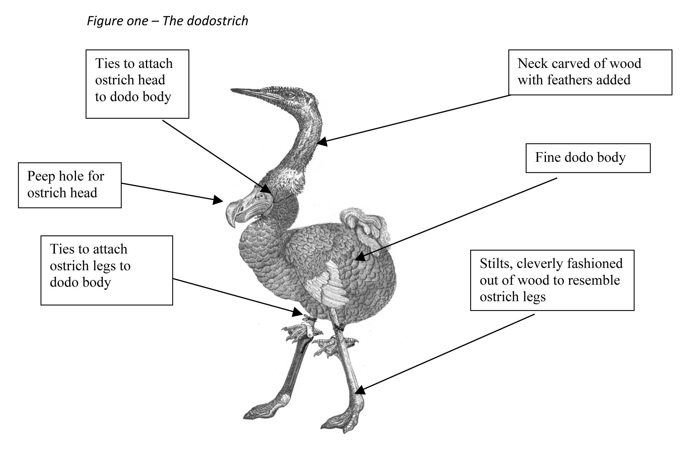 ostrich skeleton diagram opel vectra c radio wiring turkey ribs bing images