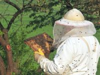 Detenido el estudio para establecer distancia entre apiarios  por falta de recursos