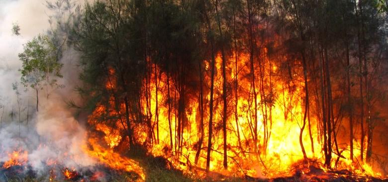Disminuyeron los incendios en 2015: CONAFOR Jalisco