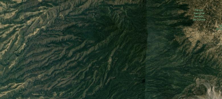 Tala clandestina en las faldas del Nevado de Colima