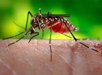 Falsa alarma sobre brote de dengue en Gómez Farías