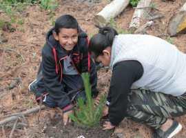 Reforestarán el Parque Nacional Nevado de Colima y puedes participar