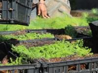 APEAJAL dona pinos y cedros a productores