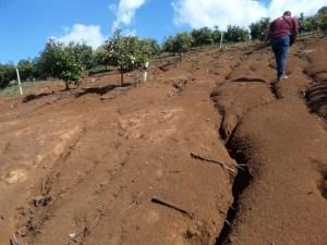 En San Gabriel, PROFEPA clausura 300 hectáreas de plantaciones ilegales de aguacate