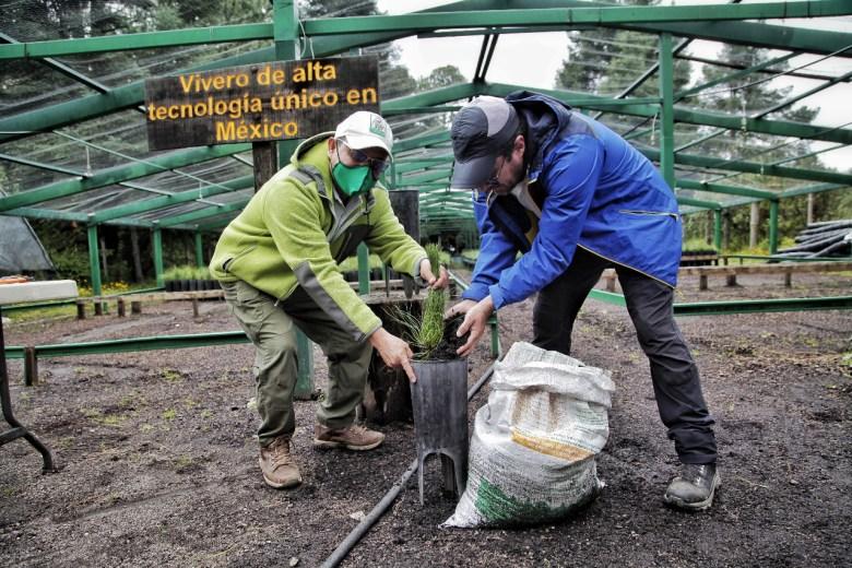 Desde su instalación vivero del Nevado de Colima ha producido 300 mil pinos