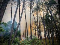 Incendio afecta 500 hectáreas de la Sierra de Manantlán; 46 brigadistas combaten el fuego