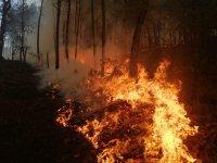 Sofocan incendios en el sur de Jalisco, 820 hectáreas quemadas