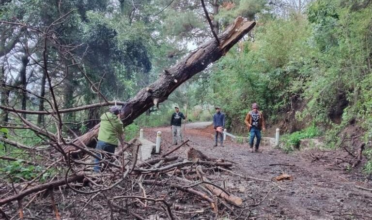 Liberan acceso al Nevado de Colima tras la caída de árboles el fin de semana