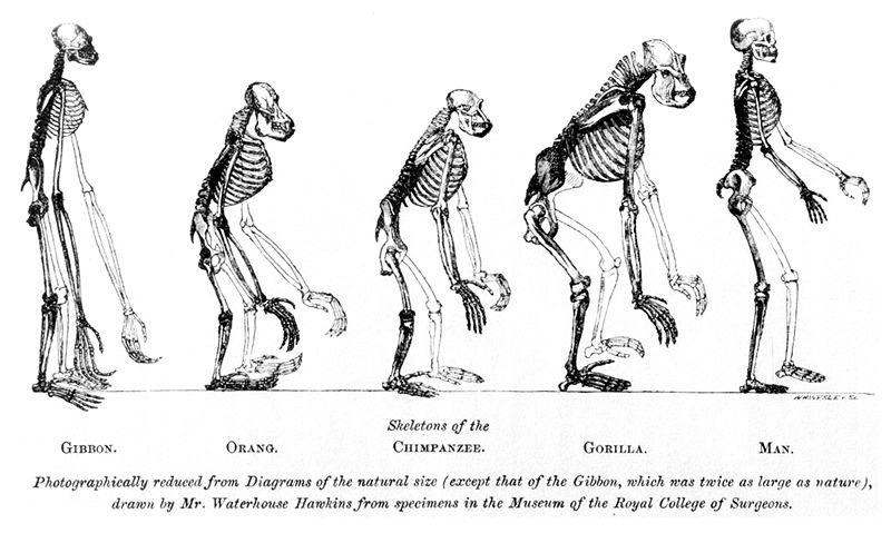 Ilustración de Huxley