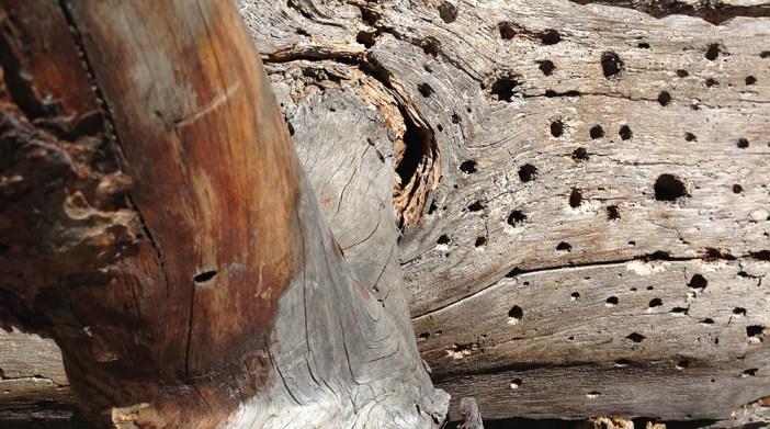 Baum-Wurzel-Kinder-Teenager-selbstständig werden-