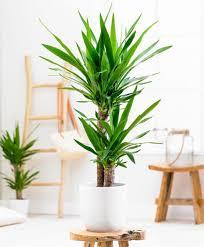 Planta Exterior
