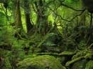 los-arboles-y-los-bosques-fueron-simbolos-de-vida-y-proteccion-en-la-astrologia-celta-y-a-su-alrededor-fue-desarrollada-su-cultura-en-su-tiempo-los-druidas-inspirados-en-la-magia