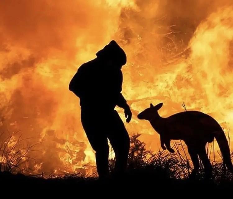 La tragedia de los incendios en Australia