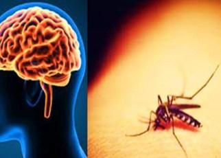 Potencial virus mortal transmitido por mosquitos