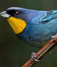 Avistamiento de aves en el Bosque de La Niebla - Tour Vuelta al Occidente del Valle del Cauca