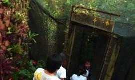 Visita el Mariposario Andoke en Cali, Colombia
