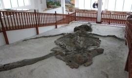 Museo Geológico de Ingeominas Cali, Colombia