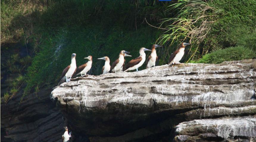 En Isla Palma Ladrilleros, el santuario de la aves.