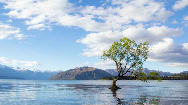 photo of tree on lake