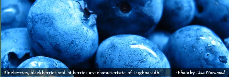 Lughnasadh - Blueberries 2