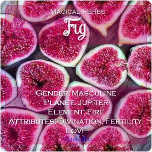 Fig Magical Meaning | Fig Magical Properties | Magical Herbs - Elune Blue