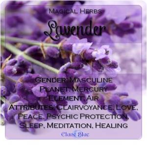 Lavender Magical Meaning | Lavender Magical Properties | Magical Herbs - Elune Blue