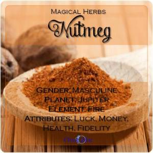 Nutmeg Magical Meaning | Nutmeg Magical Properties | Magical Herbs - Elune Blue