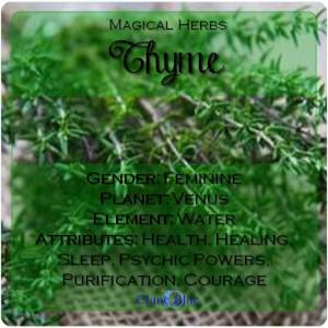 Thyme Magical Meaning | Thyme Magical Properties | Magical Herbs - Elune Blue