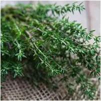 Magical Herbs Thyme