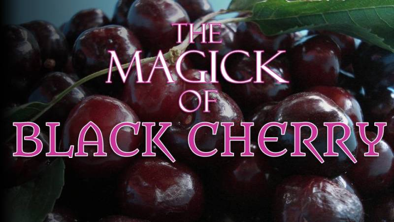 Black Cherries can strengthen psychic power, divination, and intuition.  Their energy is that of duality balance.  Black cherries are also connected to the energies of longevity and immortality. -- Black Cherry Magical Properties and Uses
