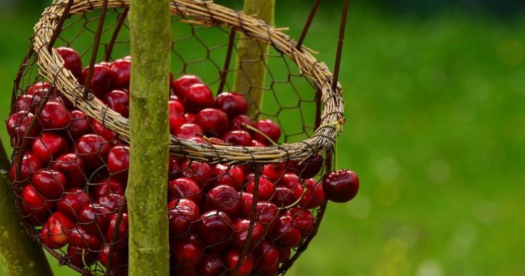 The Immortality Fruit: Cherry Fruit Magical Properties and Uses — Magical Herbs