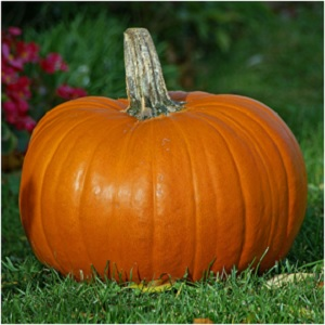 Pumpkin's capture the enchantment of the fall season, and are connected to the spirit world, mystery and magic. -- Pumpkin Magical Properties and Uses