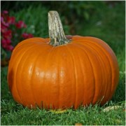 All Hallow's Gourd: Pumpkin Magical Properties and Uses -- Magical Herbs