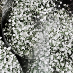 Various bouquets of Baby's Breath flowers bundled in a plastic wrapping.