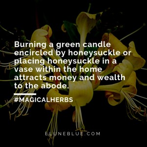 Burning a green candle encircled by honeysuckle or placing honeysuckle in a vase within the home attracts money and wealth to the abode. -- Honeysuckle Magical Properties and Uses
