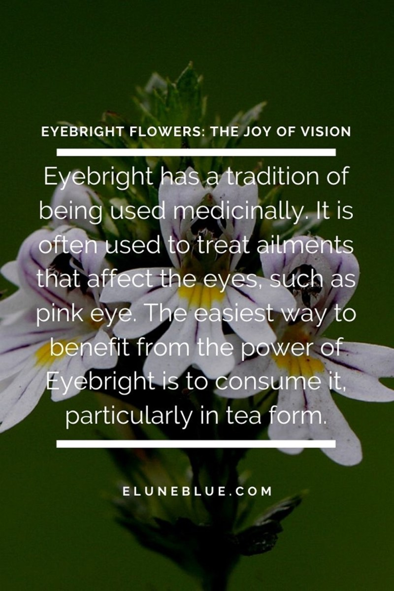 """An eyebright flower in the background. In the foreground, the text says: """"Eyebright has a tradition of being used medicinally. It is often used to treat ailments that affect the eyes, such as pink eye. The easiest way to benefit from the power of Eyebright is to consume it, particularly in tea form."""""""