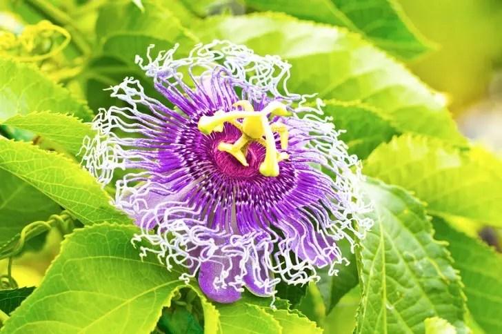 27 de mandíbula droppingly hermosas plantas que hará que su hablar a ...