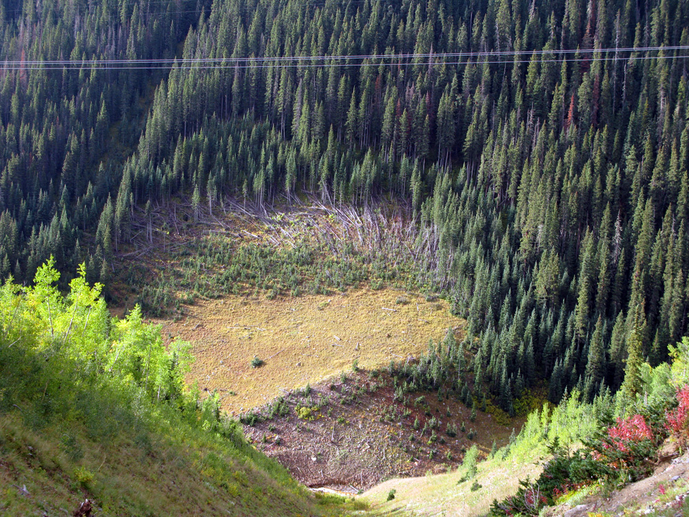 Avalanche slide path - so big it goes up the other side of the mountain.