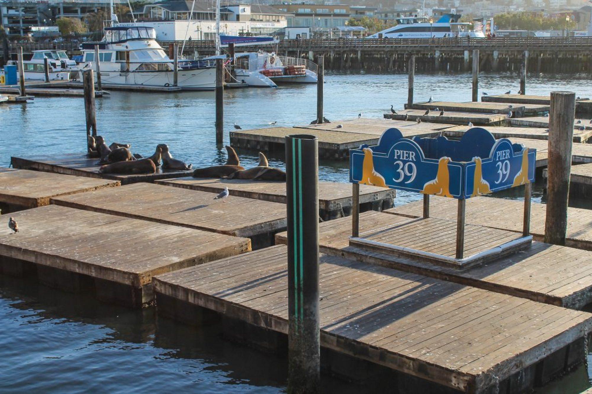 Navy Pier-13