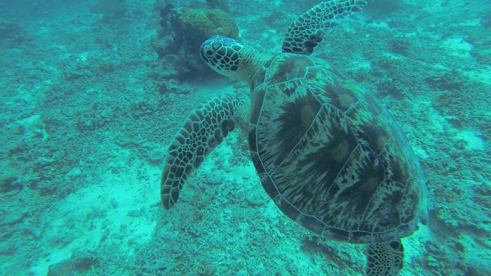 Snorkel en Gili Meno