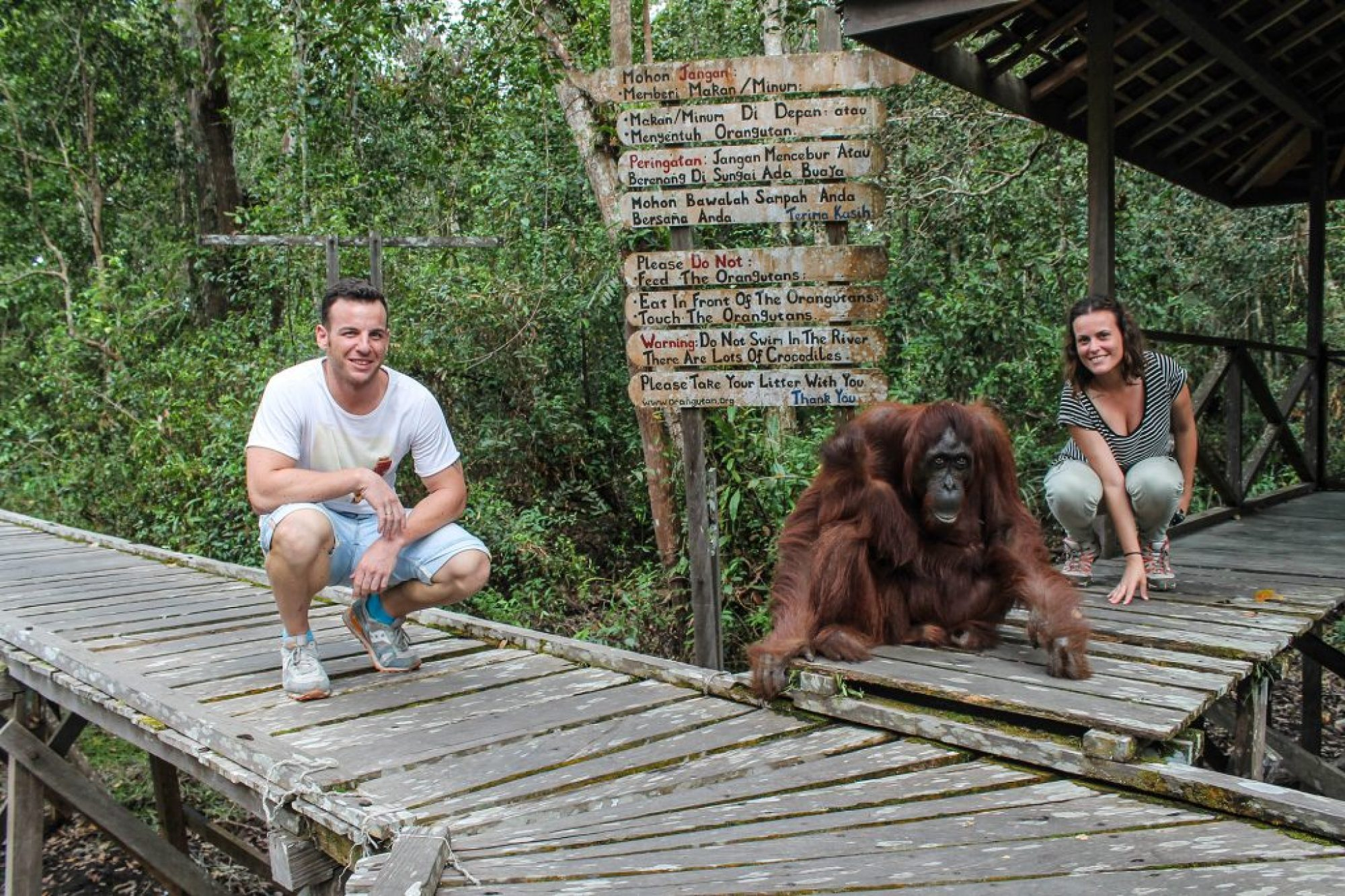 orangutanes-en-borneo-36