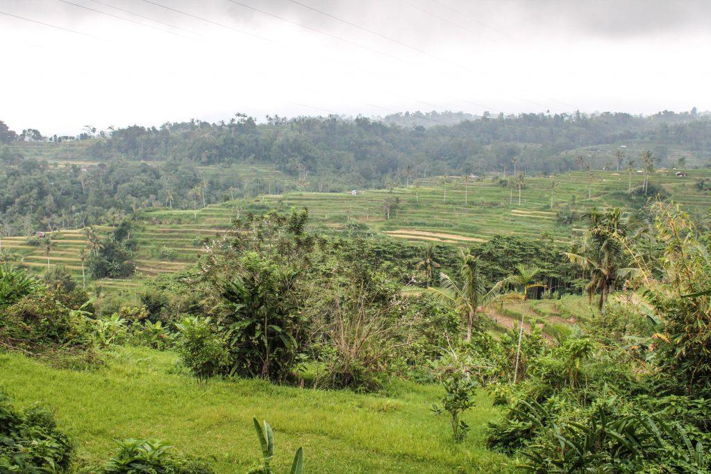 Bali con conductor - Día 2-21
