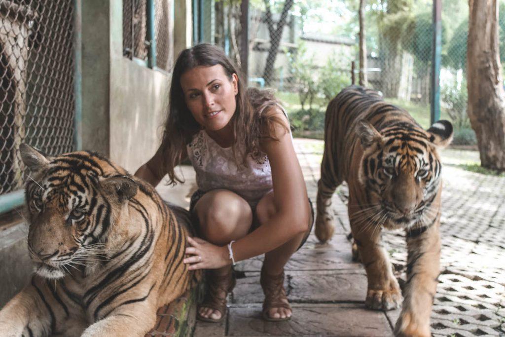 Tigres en Chiang Mai
