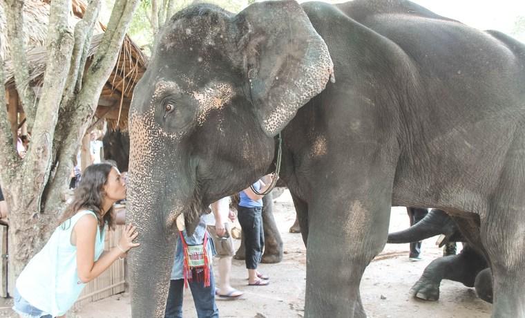 Turistadas y maltrato animal en Tailandia