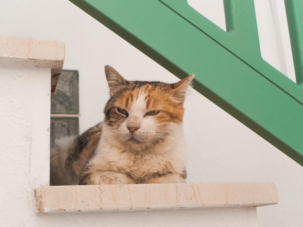 Gatos en Naoussa